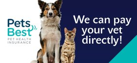 Pet Quote Insurer